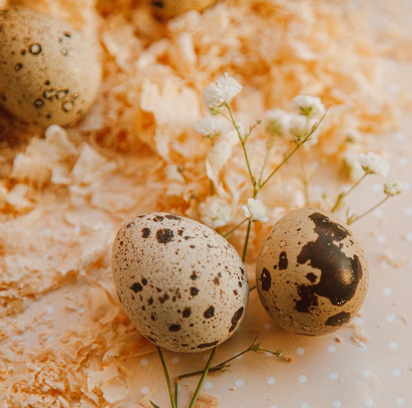 miniatura do artykułu Składamy Państwu życzenia zdrowych i wesołych Świąt Wielkanocnych!